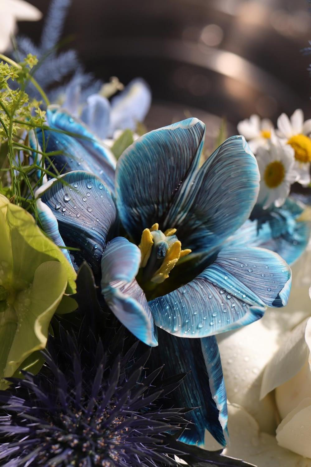 livrari-flori-piatra-neamt